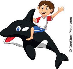 menino, caricatura, montando, orca