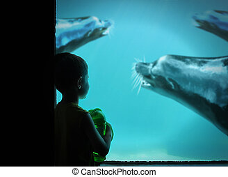 menino, em, jardim zoológico, com, leões marinhos, em, água
