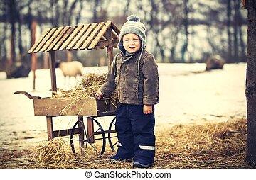 menino, fazenda