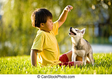 menino, filhote cachorro, jovem, asiático, capim, tocando
