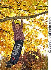 menino, filial árvore, penduradas