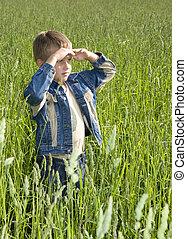 menino, olhando jovem, campo, verde, horizonte, sonhar, capim, feliz