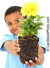 menino, planta, pretas, prendendo criança, adorável