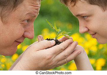 menino, planta, verde, segurando, hands., homem