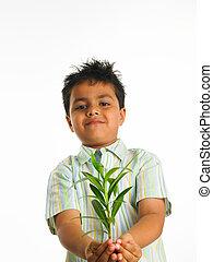 menino, sapling, verde, segurando
