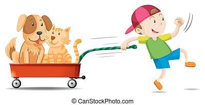 menino, vagão, cão, aquilo, gato, puxando