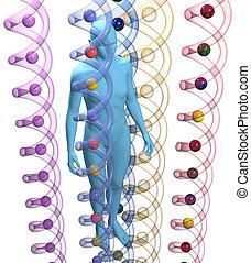 menneske, 3, dna., genetisk, videnskab, person