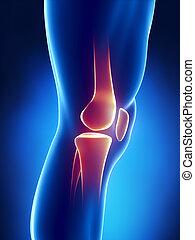 menneske knæ, detaljeret, udsigter