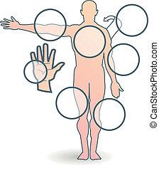 menneske krop