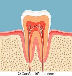 menneske, tand, ind, en, skære