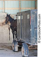 Menonite carriage parking