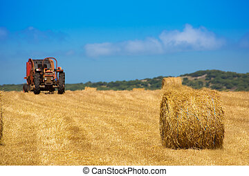 Menorca combine tractor wheat with round bales in golden field