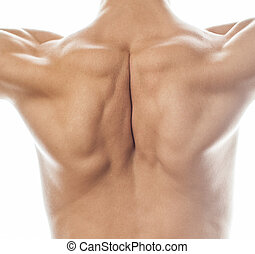 mens back close up isolated on white background, many muscle demonstration, healthy body concept
