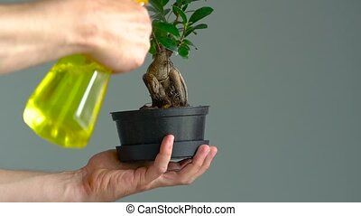 Men's hands are sprayed with bonsai. Close-up. Slow motion...