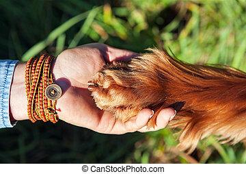 menschliche hand, besitz, hund, pfote