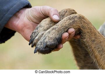 menschliche hand, und, hundepfoten