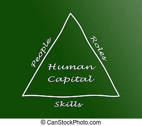 menschlicher kapital
