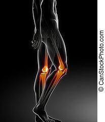 menschliches knie, medizinische ultraschallaufnahme