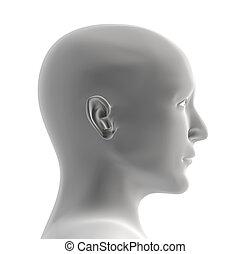 menselijk hoofd, van, grijze , kleur