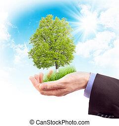 menselijke hand, met, gras, en, boompje