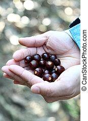 menselijke handen, met, zaden