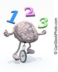 menselijke hersenen, jongleur, met, getallen