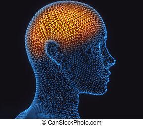 menselijke hersenen, macht, aansluitingen