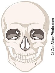 menselijke schedel, op wit, achtergrond