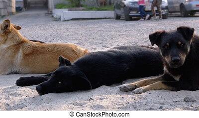 mensonge, meute, quatre, voiture, chiens, rue., ...