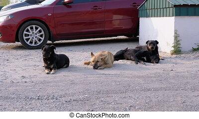 mensonge, quatre, voiture, rue., chiens, stationnement, ...