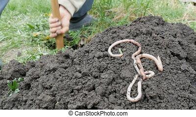 mensonge, terre, pelle, contre, grand, long, creuser, trou, ...
