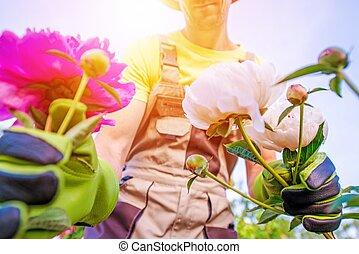 menstruáció, kertész, törődik