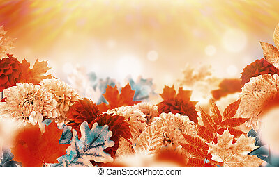 menstruáció, oak., zöld, ősz, chrysanthemums., háttér, yellowed, juharfa