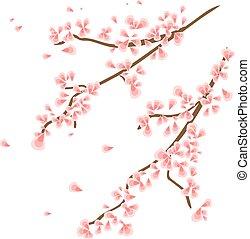 menstruáció, sakura, elágazik