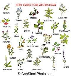 menstrual, calambres, tratamiento, mejor, hierbas