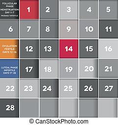 Menstrual calendar - Menstrual cycle calendar. Avarage...