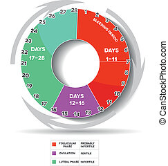 Menstrual calendar - Menstrual cycle graphic. Avarage...