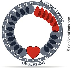 Menstrual cycle graphic. Avarage menstrual cycle days. ...