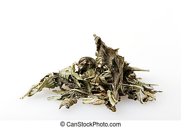 Mentha Is A Genus Of Plants In The Family Lamiaceae (Mint Family).