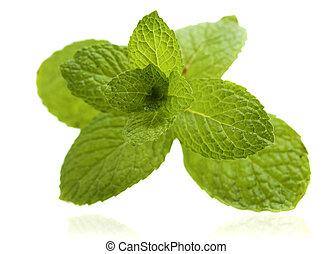 menthe, fond, blanc vert