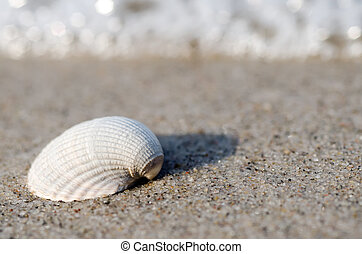 mentiras, playa de la cáscara