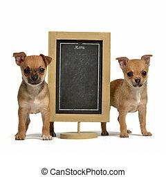 menu, puppiea, deux, tableau noir