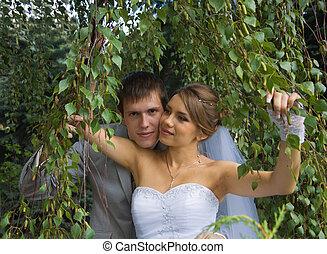 menyasszony inas, gyalogló, közel, nyírfa