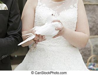 menyasszony, noha, galamb, alatt, kéz
