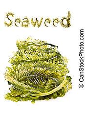 mer, frais, andaman, algue