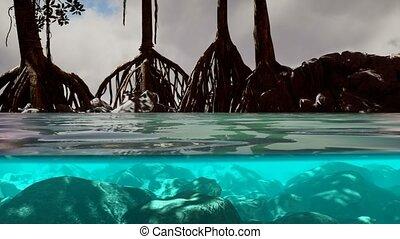 mer, mangrove, au-dessus, arbres, surface, au-dessous