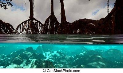 mer, mangrove, au-dessus, au-dessous, arbres, surface