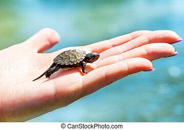 mer, petit, tortue