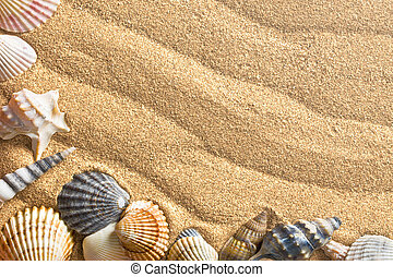 mer sable, coquilles