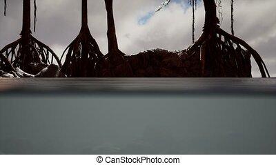 mer, surface, arbres, au-dessous, mangrove, au-dessus